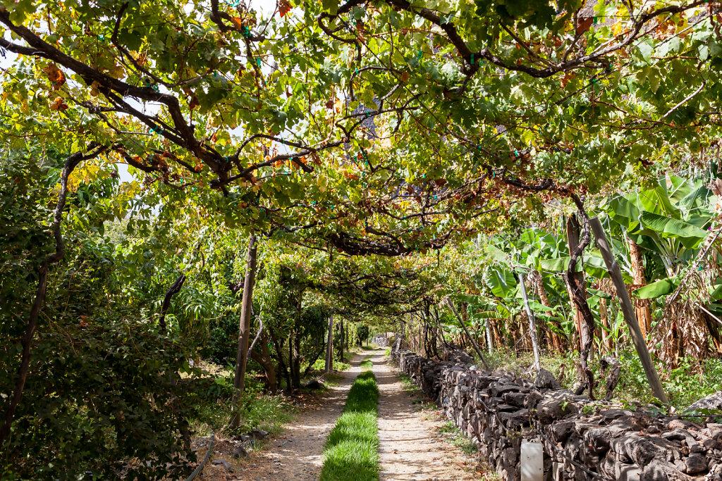 "Fajã dos Padres an der Südküste Madeiras produziert den besten Madeirawein der Sorte ""Malmsey"" (Fajã dos Padres on the south coast of Madeira produces the best Madeira wine of the ""Malmsey"")"